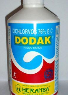 insect_dodak_new