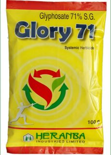 glory_71